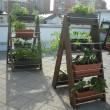 Cultivos Ecológicos
