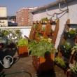 City crops