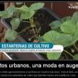 Urban horticulture